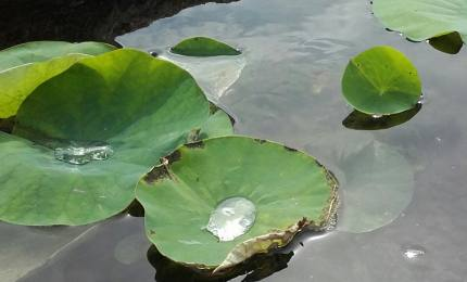 Création de bassin 17