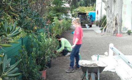 Entretien de jardin 17